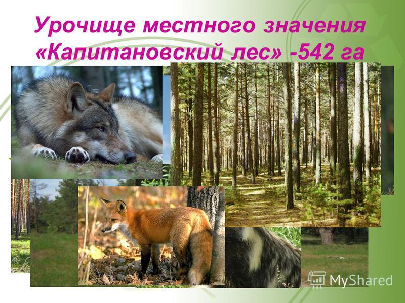 Урочище местного значения «Капитановский лес» -542 га