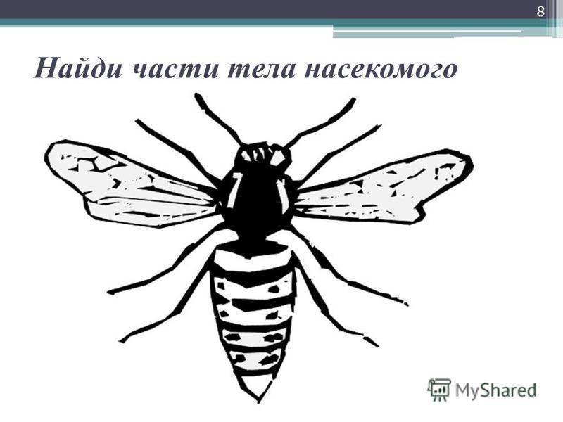 Найди части тела насекомого 8