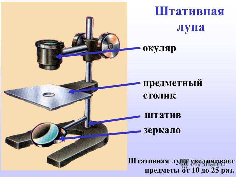 Штативная лупа штатив зеркало предметный столик окуляр Штативная лупа увеличивает предметы от 10 до 25 раз.