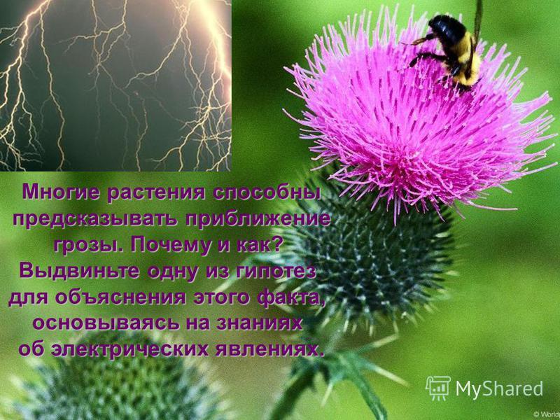 Многие растения способны предсказывать приближение предсказывать приближение грозы. Почему и как? Выдвиньте одну из гипотез для объяснения этого факта, основываясь на знаниях об электрических явлениях.