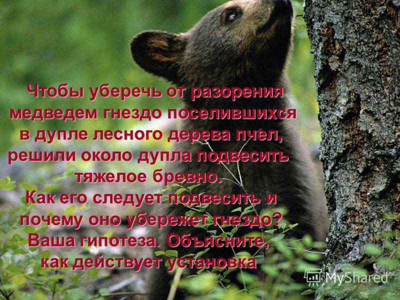 Чтобы уберечь от разорения медведем гнездо поселившихся медведем гнездо поселившихся в дупле лесного дерева пчел, в дупле лесного дерева пчел, решили около дупла подвесить тяжелое бревно. Как его следует подвесить и почему оно убережет гнездо? почему