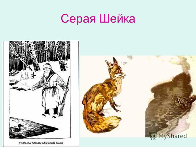 Серая Шейка