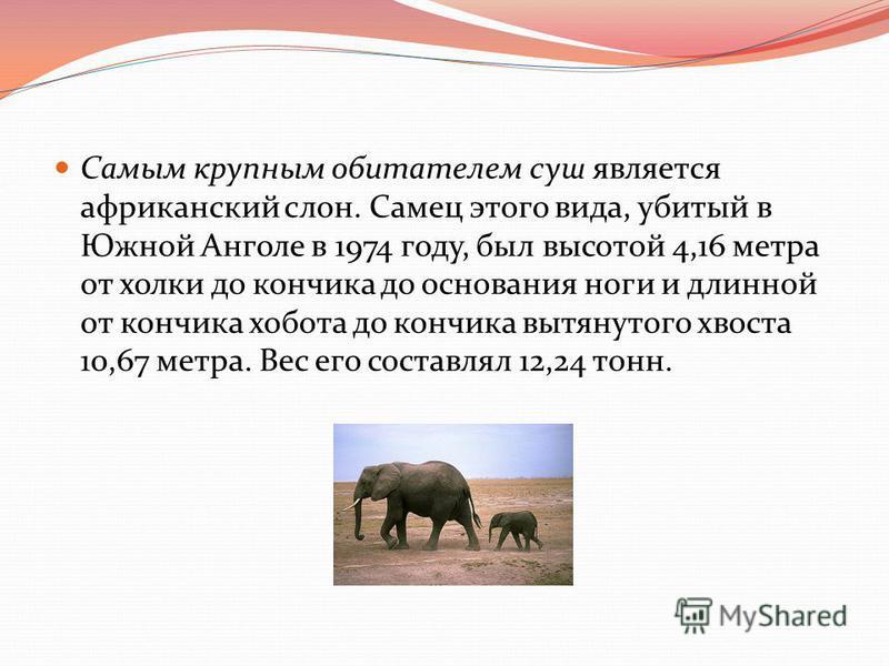 Самым крупным обитателем суш является африканский слон. Самец этого вида, убитый в Южной Анголе в 1974 году, был высотой 4,16 метра от холки до кончика до основания ноги и длинной от кончика хобота до кончика вытянутого хвоста 10,67 метра. Вес его со