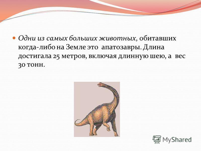 Одни из самых больших животных, обитавших когда-либо на Земле это апатозавры. Длина достигала 25 метров, включая длинную шею, а вес 30 тонн.