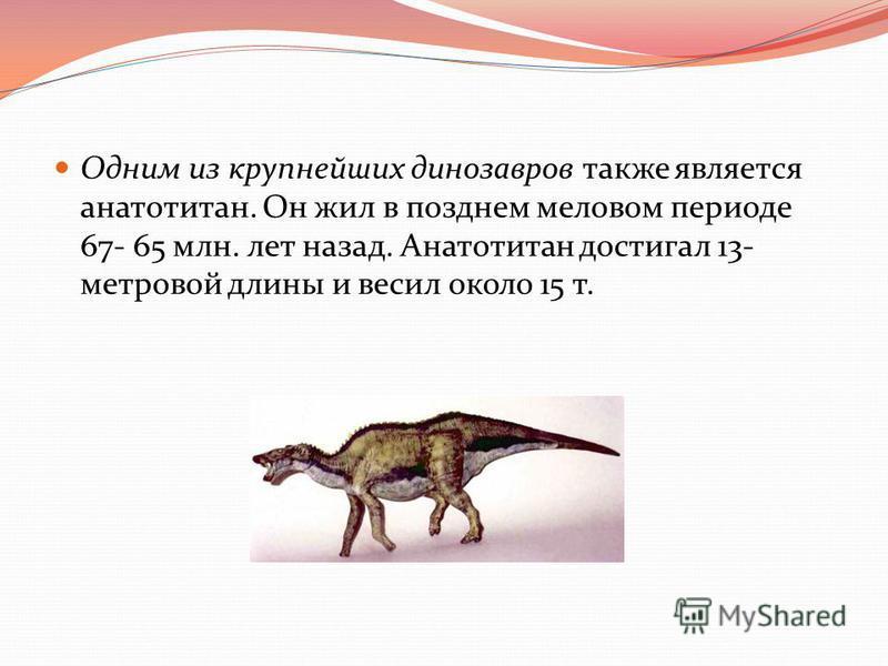 Одним из крупнейших динозавров также является анатотитан. Он жил в позднем меловом периоде 67- 65 млн. лет назад. Анатотитан достигал 13- метровой длины и весил около 15 т.
