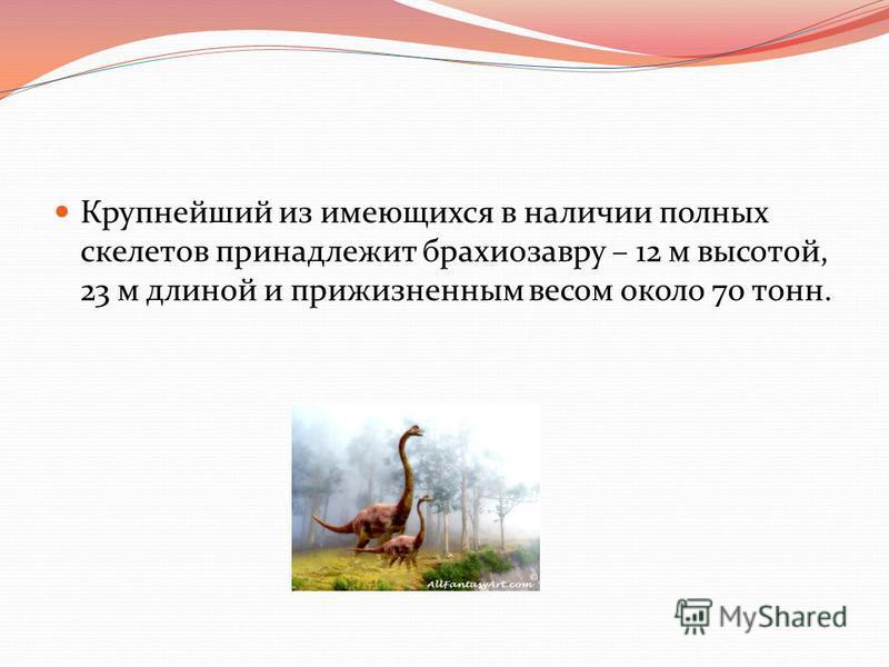 Крупнейший из имеющихся в наличии полных скелетов принадлежит брахиозавру – 12 м высотой, 23 м длиной и прижизненным весом около 70 тонн.