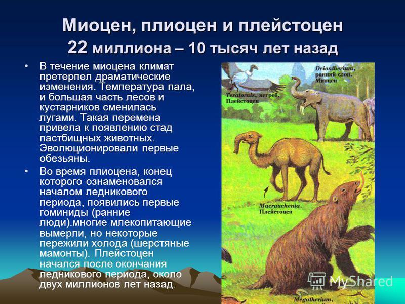 В течение миоцена климат претерпел драматические изменения. Температура пала, и большая часть лесов и кустарников сменилась лугами. Такая перемена привела к появлению стад пастбищных животных. Эволюционировали первые обезьяны. Во время плиоцена, коне