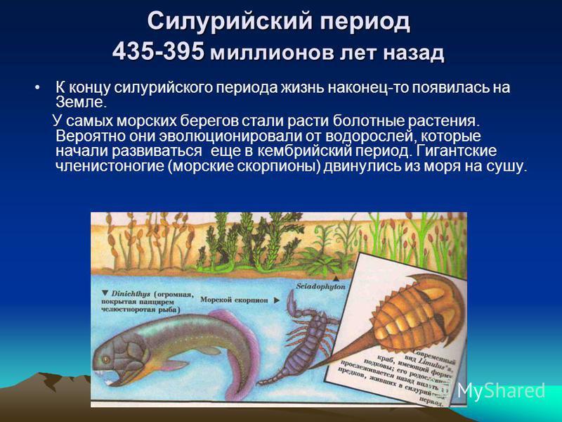 Силурийский период 435-395 миллионов лет назад К концу силурийского периода жизнь наконец-то появилась на Земле. У самых морских берегов стали расти болотные растения. Вероятно они эволюционировали от водорослей, которые начали развиваться еще в кемб