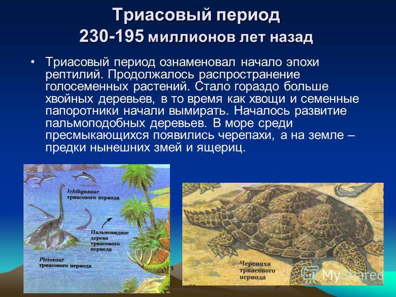 Триасовый период 230-195 миллионов лет назад Триасовый период ознаменовал начало эпохи рептилий. Продолжалось распространение голосеменных растений. Стало гораздо больше хвойных деревьев, в то время как хвощи и семенные папоротники начали вымирать. Н