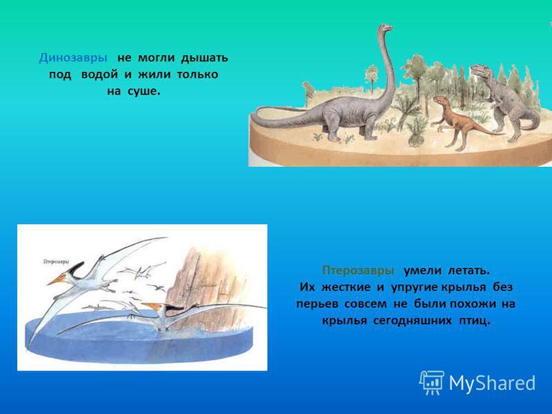 Динозавры не могли дышать под водой и жили только на суше. Птерозавры умели летать. Их жесткие и упругие крылья без перьев совсем не были похожи на крылья сегодняшних птиц.