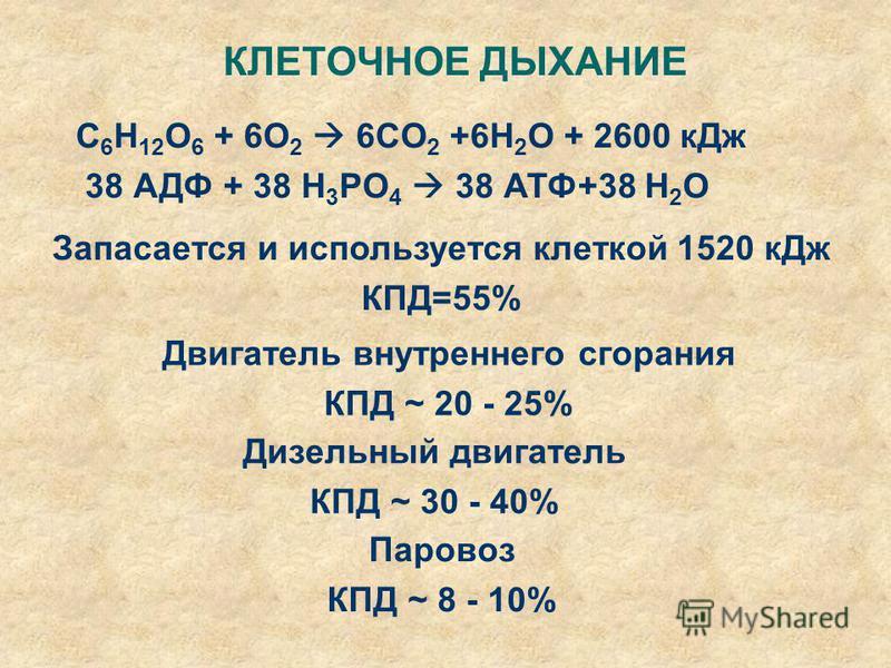 Запасается и используется клеткой 1520 к Дж КПД=55% КЛЕТОЧНОЕ ДЫХАНИЕ C 6 H 12 O 6 + 6O 2 6CO 2 +6H 2 O + 2600 к Дж 38 АДФ + 38 H 3 PO 4 38 АТФ+38 H 2 O Двигатель внутреннего сгорания КПД ~ 20 - 25% Дизельный двигатель КПД ~ 30 - 40% Паровоз КПД ~ 8