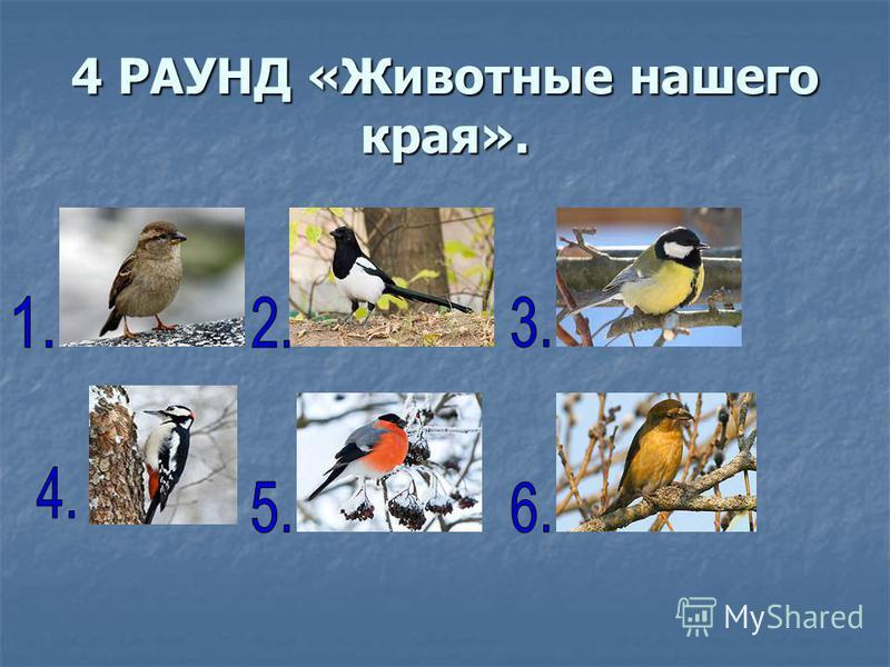 4 РАУНД «Животные нашего края».