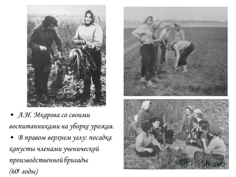 А.И. Мкарова со своими воспитанниками на уборке урожая. В правом верхнем углу: посадка капусты членами ученической производственной бригады (60 е годы)