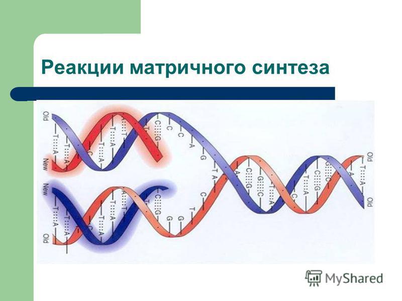 Реакции матричного синтеза