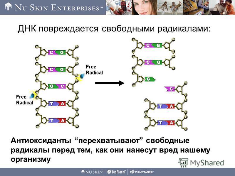 ДНК повреждается свободными радикалами: Антиоксиданты перехватывают свободные радикалы перед тем, как они нанесут вред нашему организму