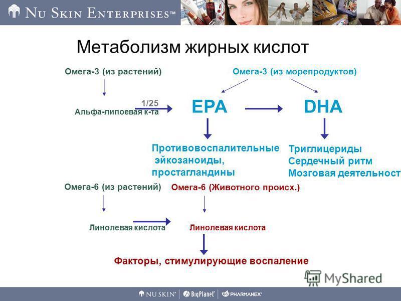 Метаболизм жирных кислот Факторы, стимулирующие воспаление Альфа-липоевая к-та Омега-3 (из растений) Противовоспалительные эйкозаноиды, простагландины Триглицериды Сердечный ритм Мозговая деятельность Омега-3 (из морепродуктов) EPADHA 1/25 Линолевая