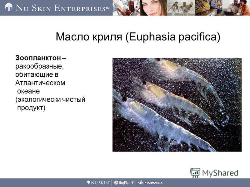Масло криля (Euphasia pacifica) Зоопланктон – ракообразные, обитающие в Атлантическом океане (экологически чистый продукт)