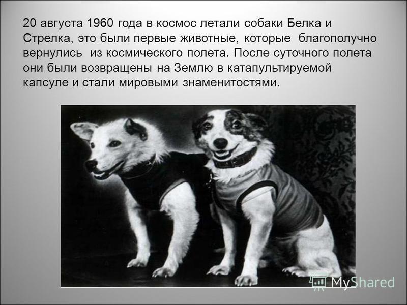 20 августа 1960 года в космос летали собаки Белка и Стрелка, это были первые животные, которые благополучно вернулись из космического полета. После суточного полета они были возвращены на Землю в катапультируемой капсуле и стали мировыми знаменитостя