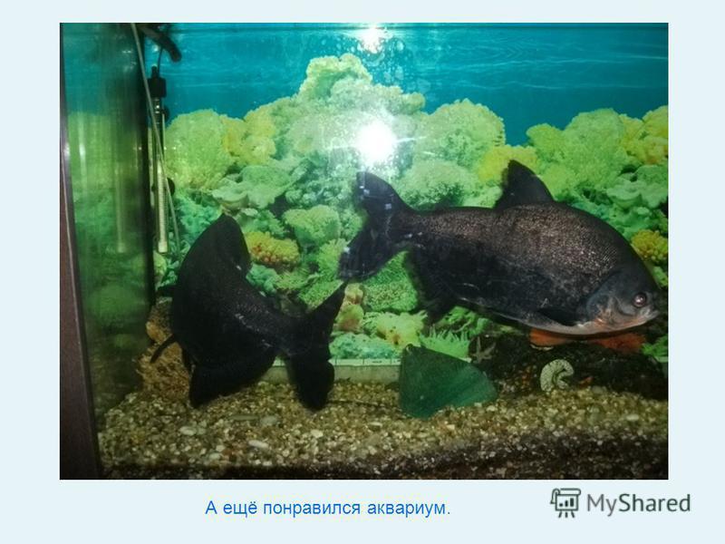 А ещё понравился аквариум.