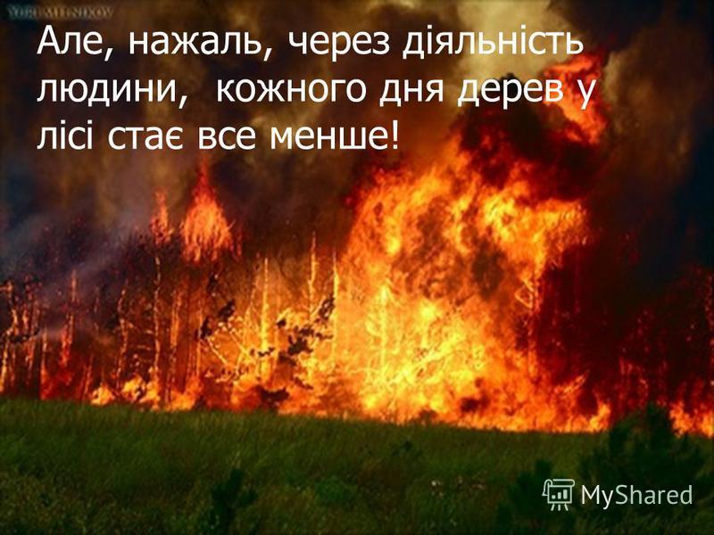 Але, нажаль, через діяльність людини, кожного дня дерев у лісі стає все менше!