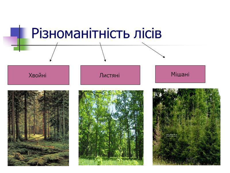 Різноманітність лісів ХвойніЛистяні Мішані