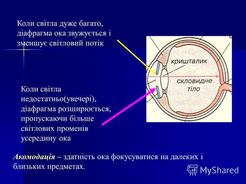 Коли світла дуже багато, діафрагма ока звужується і зменшує світловий потік Коли світла недостатньо(увечері), діафрагма розширюється, пропускаючи більше світлових променів усередину ока Акомодація – здатність ока фокусуватися на далеких і близьких пр