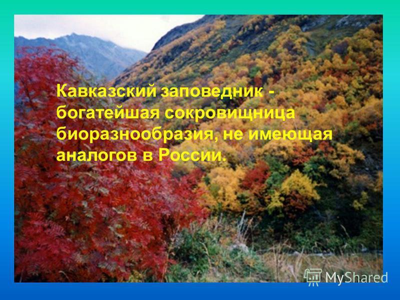 Кавказский заповедник - богатейшая сокровищница биоразнообразия, не имеющая аналогов в России.