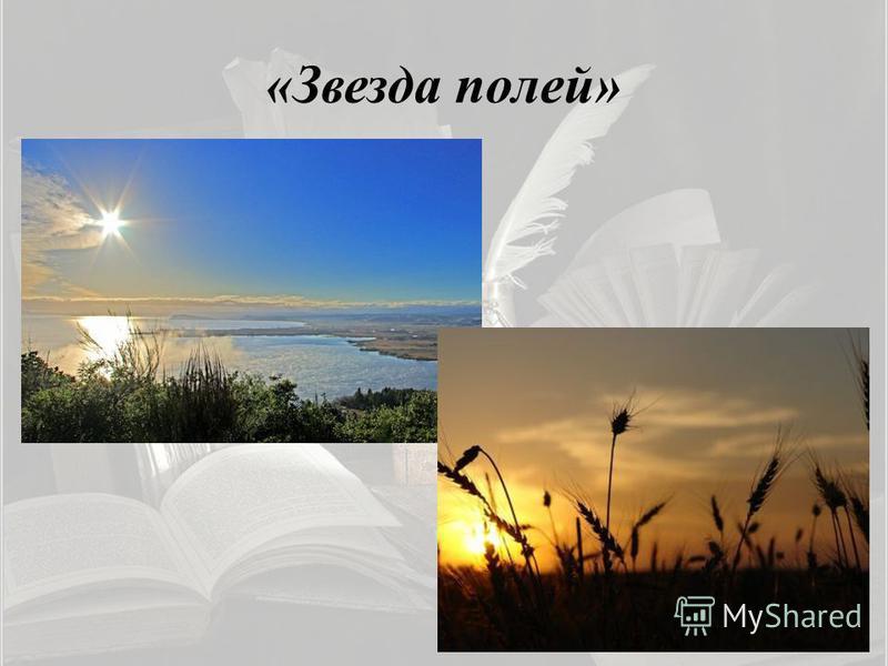 «Звезда полей»