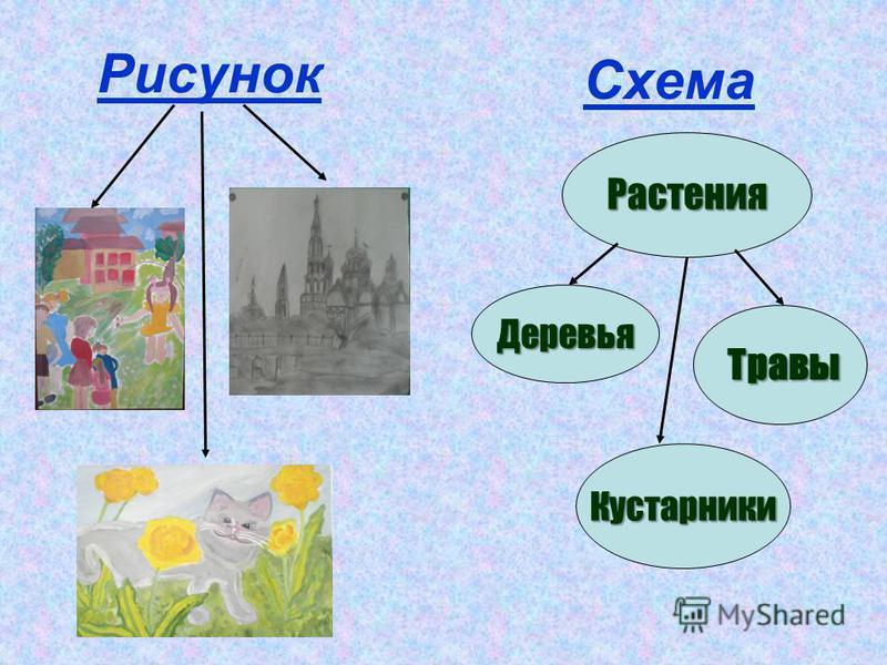 Рисунок Схема Растения Деревья Кустарники Травы
