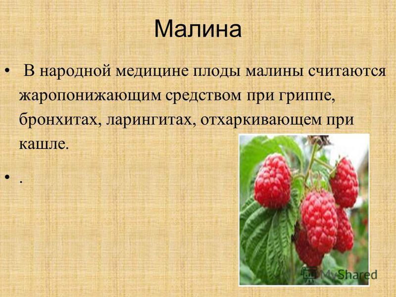 Малина В народной медицине плоды малины считаются жаропонижающим средством при гриппе, бронхитах, ларингитах, отхаркивающем при кашле..