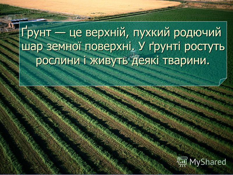 Ґрунт це верхній, пухкий родючий шар земної поверхні. У ґрунті ростуть рослини і живуть деякі тварини.