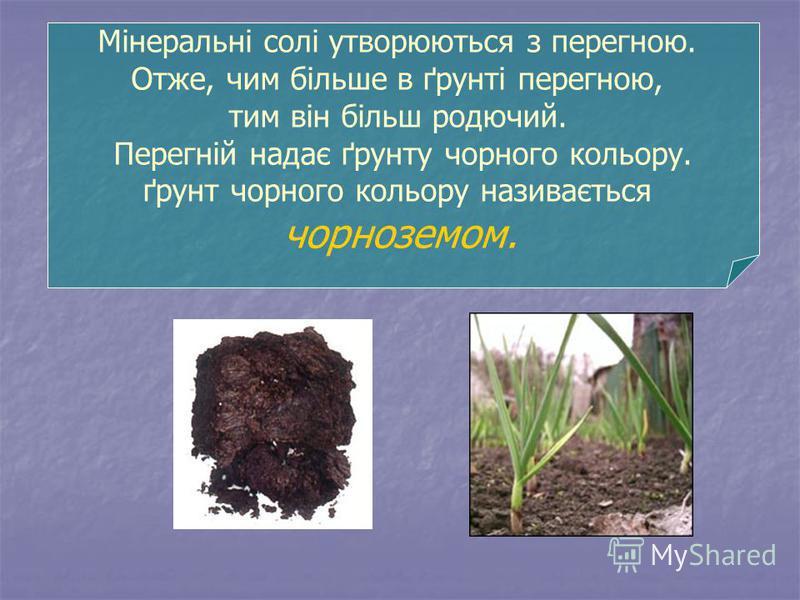 Мінеральні солі утворюються з перегною. Отже, чим більше в ґрунті перегною, тим він більш родючий. Перегній надає ґрунту чорного кольору. ґрунт чорного кольору називається чорноземом.