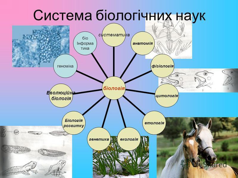 Система біологічних наук біологія систематикаанатоміяфізіологіяцитологіяетологіяекологіягенетика Біологія розвитку Еволюційна біологія геноміка біо Інформа тика