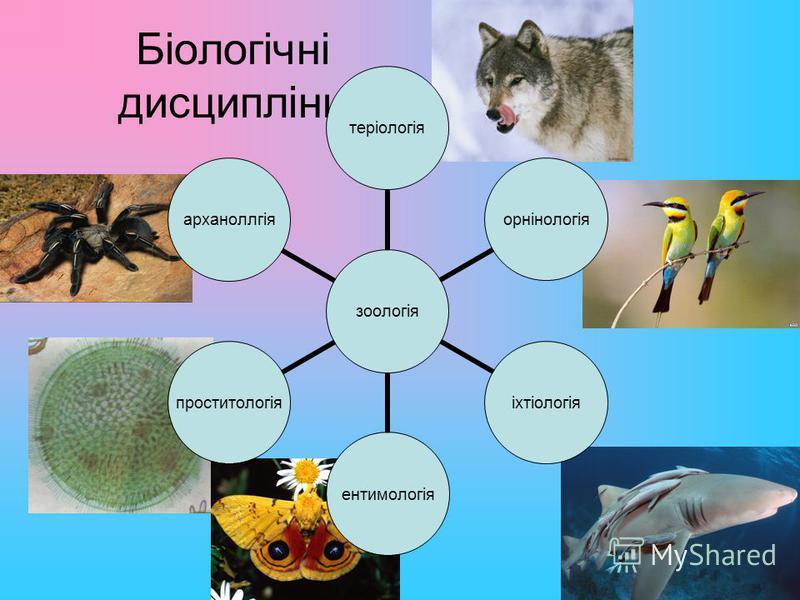Біологічні дисципліни зоологія теріологіяорнінологіяіхтіологіяентимологіяпроститологіяарханоллгія