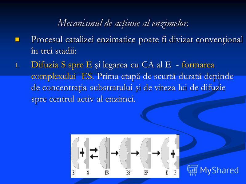 Mecanismul de acţiune al enzimelor. Procesul catalizei enzimatice poate fi divizat convenţional în trei stadii: Procesul catalizei enzimatice poate fi divizat convenţional în trei stadii: 1. Difuzia S spre E şi legarea cu CA al E - formarea complexul
