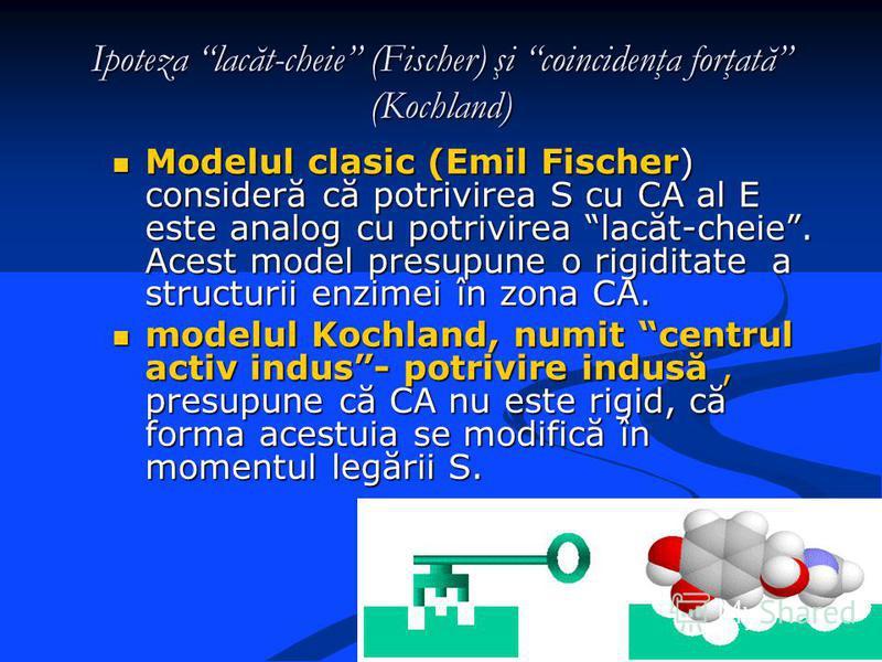 Ipoteza lacăt-cheie (Fischer) şi coincidenţa forţată (Kochland) Modelul clasic (Emil Fischer) consideră că potrivirea S cu CA al E este analog cu potrivirea lacăt-cheie. Acest model presupune o rigiditate a structurii enzimei în zona CA. Modelul clas