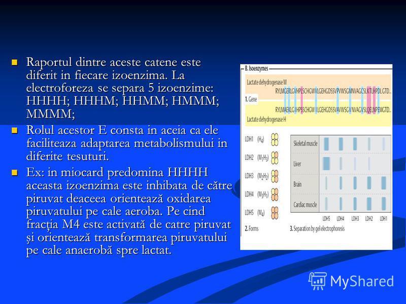 Raportul dintre aceste catene este diferit in fiecare izoenzima. La electroforeza se separa 5 izoenzime: HHHH; HHHM; HHMM; HMMM; MMMM; Raportul dintre aceste catene este diferit in fiecare izoenzima. La electroforeza se separa 5 izoenzime: HHHH; HHHM