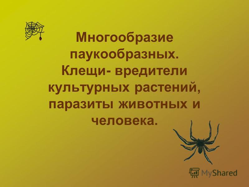 Многообразие паукообразных. Клещи- вредители культурных растений, паразиты животных и человека.