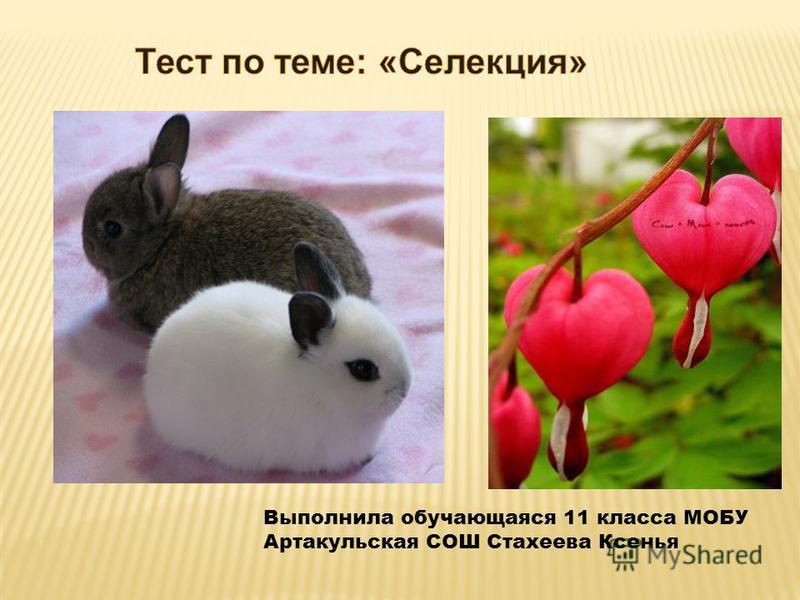 Выполнила обучающаяся 11 класса МОБУ Артакульская СОШ Стахеева Ксенья