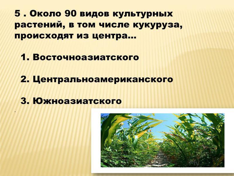 5. Около 90 видов культурных растений, в том числе кукуруза, происходят из центра... 1. Восточноазиатского 2. Центральноамериканского 3. Южноазиатского.