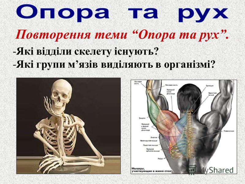 Повторення теми Опора та рух. -Які відділи скелету існують? -Які групи мязів виділяють в організмі?