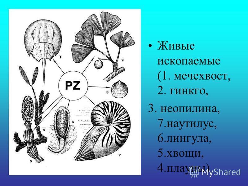 Живые ископаемые (1. мечехвост, 2. гинкго, 3. неопилина, 7.наутилус, 6.лингула, 5.хвощи, 4.плауны)