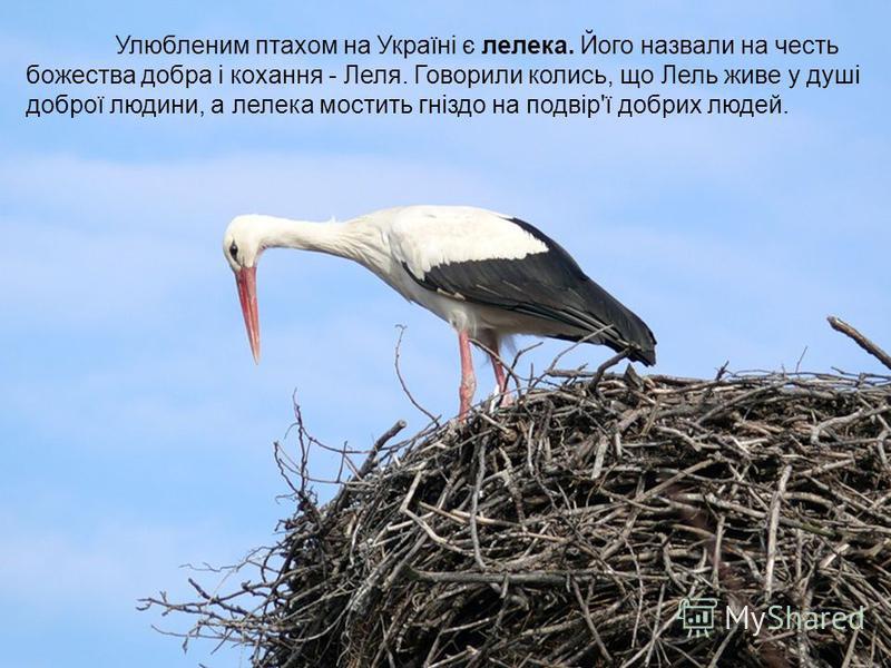 Улюбленим птахом на Україні є лелека. Його назвали на честь божества добра і кохання - Леля. Говорили колись, що Лель живе у душі доброї людини, а лелека мостить гніздо на подвір'ї добрих людей.