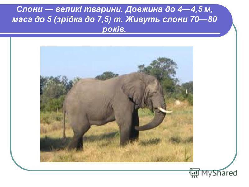 Слони великі тварини. Довжина до 44,5 м, маса до 5 (зрідка до 7,5) т. Живуть слони 7080 років.