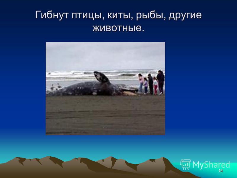 14 Гибнут птицы, киты, рыбы, другие животные.