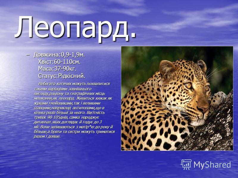 Леопард. –Довжина:0,9-1,9м. Хвіст:60-110см. Маса:37-90кг. Статус:Рідкісний. Небагато котячих можуть похвалитися такими варіаціями зовнішнього вигляду,раціону та географічних місць мешкання,як леопард. Живиться хижак як жуками гнойовиками,так і велики