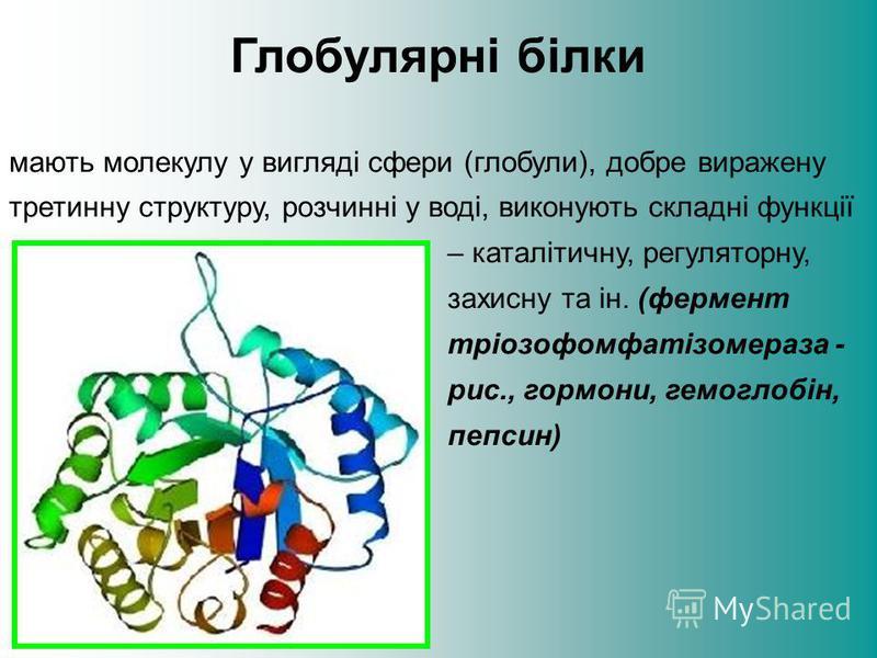 Глобулярні білки мають молекулу у вигляді сфери (глобули), добре виражену третинну структуру, розчинні у воді, виконують складні функції – каталітичну, регуляторну, захисну та ін. (фермент тріозофомфатізомераза - рис., гормони, гемоглобін, пепсин)