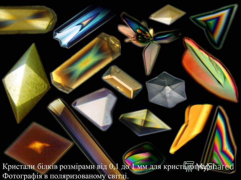 Кристали білків розмірами від 0,1 до 1 мм для кристалографії. Фотографія в поляризованому світлі.