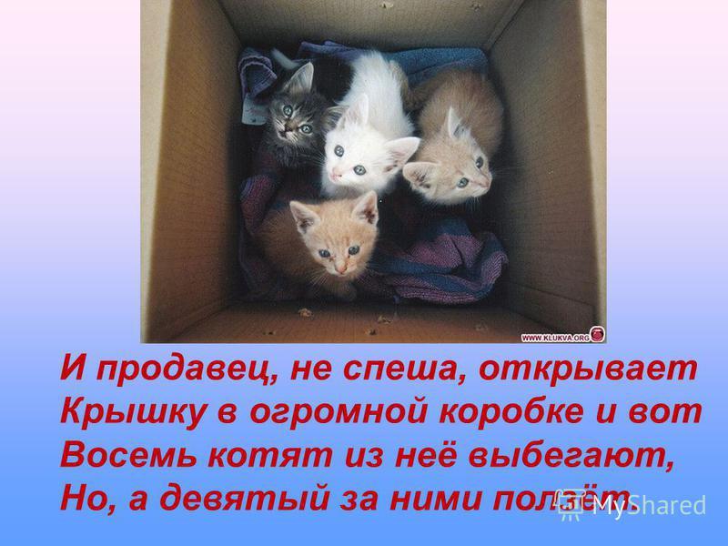 И продавец, не спеша, открывает Крышку в огромной коробке и вот Восемь котят из неё выбегают, Но, а девятый за ними ползёт.