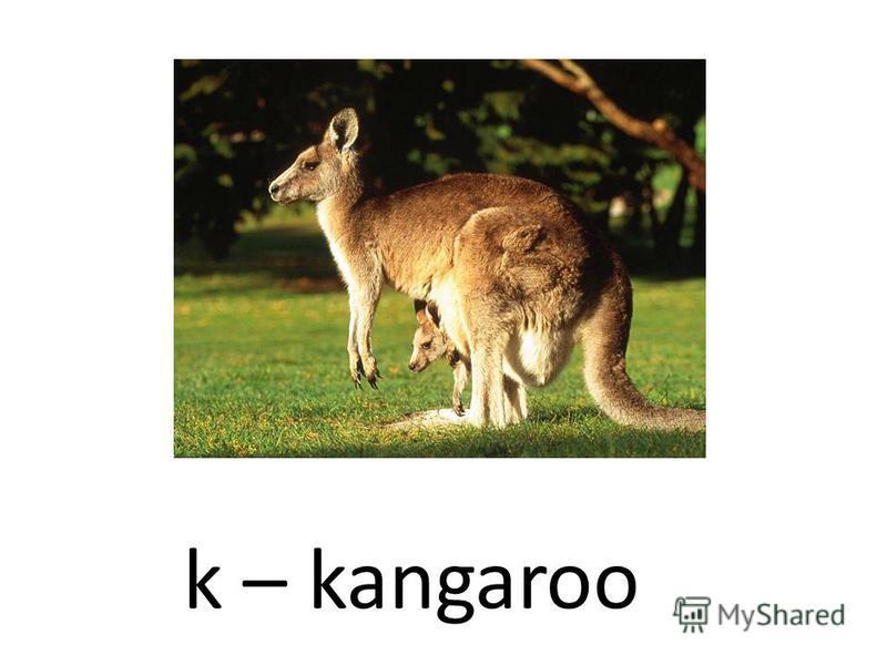 k – kangaroo